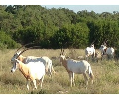 Texas Ranches For Sale | Texas Hunting Land for Sale