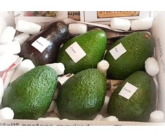 Organic Avocados : Welcome | Avocado Monthly