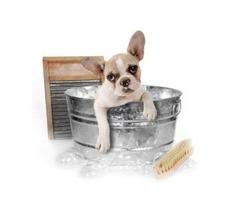 Dog Boarding - Daycare & Bathing