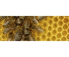 Bee Control Services in Atlanta