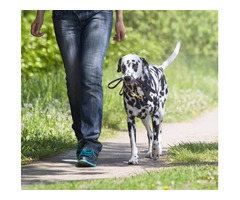 Best Dog Training Program for Your Pet