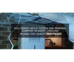 Mold Removal, Easley SC – Array of Solutions