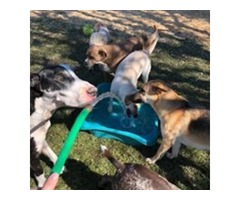 Vaccination FVRCP Montgomery | The Barkly Pet Retreat & Spa