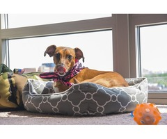 Best Online Pet Accessories store in USA - Pets Care Campus