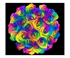 Now Available- Rainbow Roses Delivery at Bloom Luxury