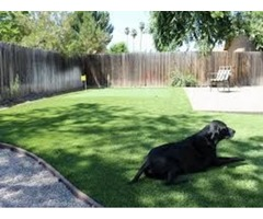 Best Artificial Grass for Pets