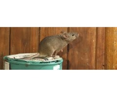 Rodent Control Services in Atlanta