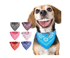 Buy Best Quality Dog collars  at best Prices !!