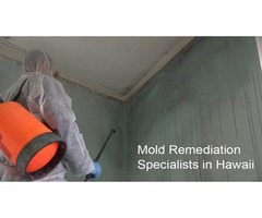 How to Remove Mold from Your Home