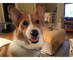 (ANYWHERE USA) Personal, Affordable, Local Pet Care Providers