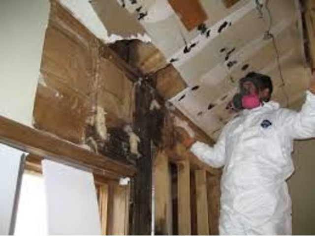 Mold - Cleanup and Remediation - servicemaster247 | free-classifieds-usa.com