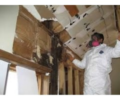 Mold - Cleanup and Remediation - servicemaster247