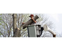 Emergency Tree Removal In Loganville | Affordable Tree Removal Services | free-classifieds-usa.com