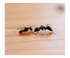 Ant Pest Control Services in Atlanta