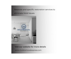 Resolute restoration services to eliminate mold issues