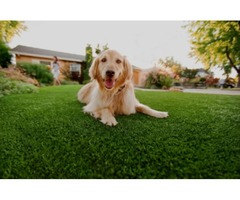 Get Synthetic Grass for Your Dogs
