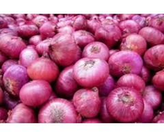 Get High Quality, Red and Fresh Onion from Reputed Distributors in Mexico