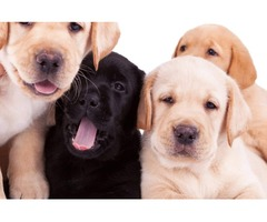 Affordable Puppy Wellness Packages