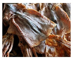 Buy dried squid online and enjoy its health benefits
