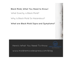 Black Mold Signs