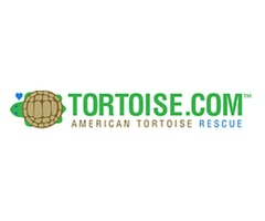 Protect Turtles and Tortoises