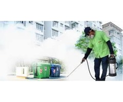 Pest Control Services in Frisco