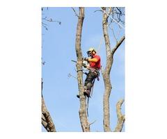 Tree Trimming Service Anaheim CA