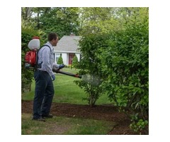 Mosquito and Tick Experts Eastern Massachusetts