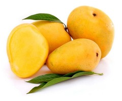 Enjoy Natural and Fresh Mango by Purchasing from Reputed Suppliers in Mexico