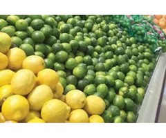 Obtain Premium Quality of Juicy Organic Lime from Distributors in Mexico | free-classifieds-usa.com