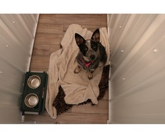 Best Overnight Dog Boarding Services