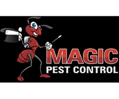 Termite Control and Bed Bugs Control