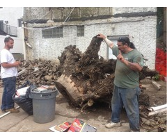 Affordable Tree Stump Removal Service Bronx