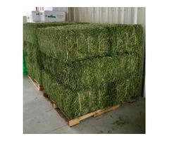 Sell Alfalfa hay and pellets