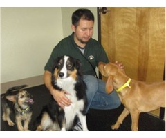 The best Dog Daycare McLean in Virginia