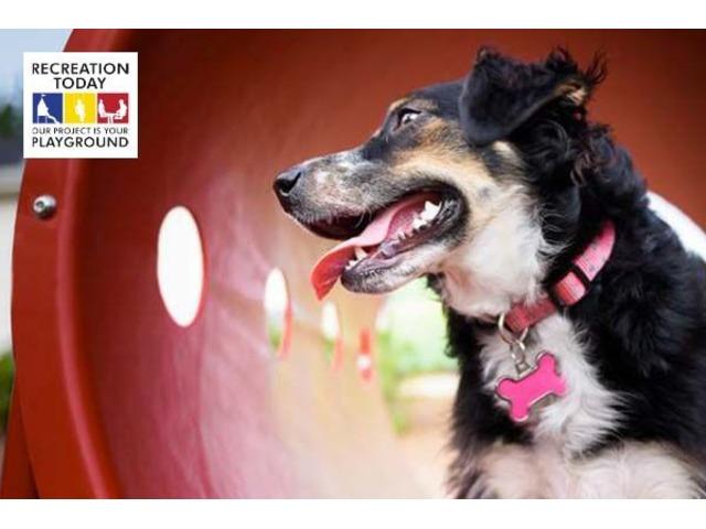 Get High-Quality and Durable Dog Park Equipment | free-classifieds-usa.com