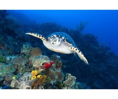 Partner With Wyndham Resorts For Grand Cayman Islands Scuba Diving Vacations