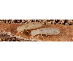 offer various pest services such as termites, ants, cockroaches