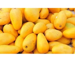 Fresh Distributors in Mexico Supply Organic and High-quality Mango
