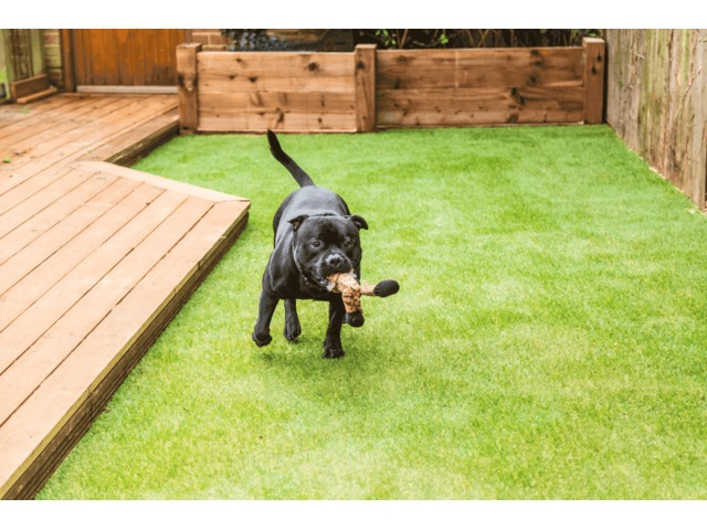 Artificial Turf for Dogs - Smart Grass USA | free-classifieds-usa.com