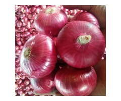 Make Tasty Savory Dishes by Purchasing Fresh Onion from Mexico Based Distributors