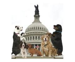 Dog Daycare McLean VA