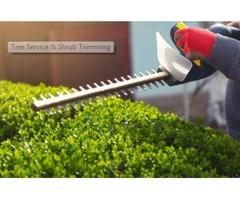 Get Expert Tree service in Sacramento
