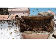 Professional Bee Extermination Service in Houston