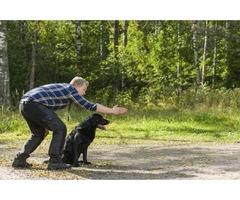 Conroe Pet Training at The Barkly Pet Retreat & Spa