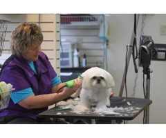 Old Dominion Animal Health Center -  McLean VA Veterinarian
