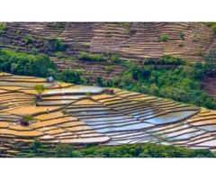 Dzukou Valley Trek - Nagaland   Plan The Unplanned