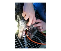 Animal Hospital at Middletown | Pet Veterinary Services