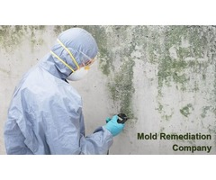 What's the Difference Between Mold Removal and Mold Remediation