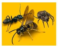 Buffalo Pest Control | Exterminator Syracuse NY